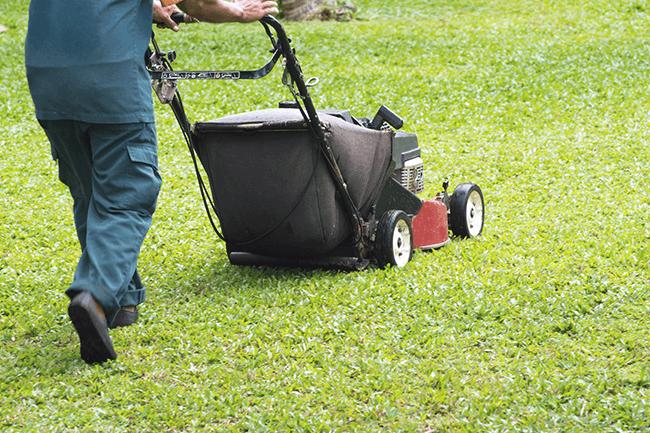 Mann klipper gresset. Foto.